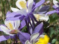 5 plante decorative care sunt perfecte pentru un gradinar incepator