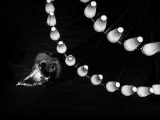 Nunta, surprinsa altfel! Top 5 fotografii impresionante