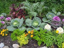 Solul din gradina este lipsit de nutrienti? Iata cum iti poti da seama!