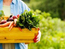 Vrei o gradina colorata? Iata ce legume poti sa cultivi anul acesta