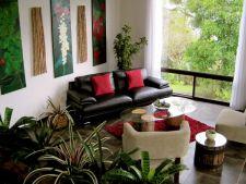 De ce nu supravietuiesc plantele din apartament? Iata ce sa nu faci!
