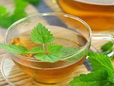 Urzica, o planta medicinala care face minuni
