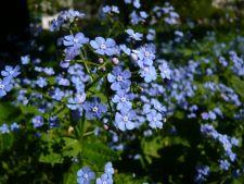 3 flori de primavara pentru gradina ta care infloresc tarziu