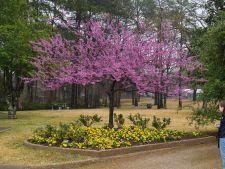 6 arbusti cu flori vesele de primavara