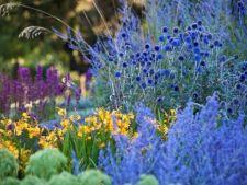 Ce plante sa combini ca sa ai o gradina cu stil