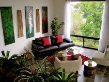 Lumina artificiala pentru plantele de apartament: cum alegi culoarea potrivita