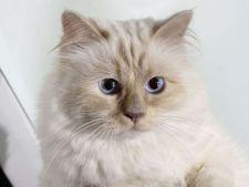 Sa tot fii invidios! O pisica a castigat 3 milioane de euro in cateva ore!