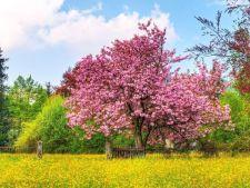 Magnolia, arbustul fermecator din gradina