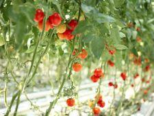 5 moduri inedite de a cultiva rosiile
