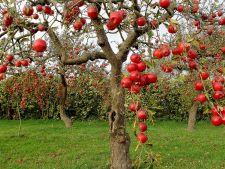 4 pomi fructiferi perfecti pentru orice gradina