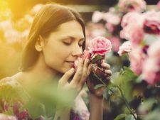 Gradina care iti incanta toate simturile: 3 plante parfumate de curte
