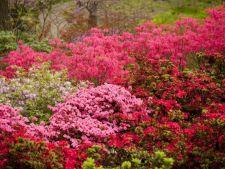 Cele mai frumoase flori ale lunii mai! Iata ce nu trebuie sa-ti lipseasca din gradina