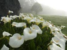 Cele mai potrivite plante decorative pentru solurile umede
