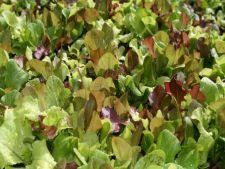 3 legume usor de cultivat in orice gradina