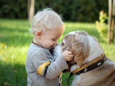 10 activitati distractive pentru copilul tau la Pet Expo