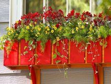 Infrumuseteaza-ti ferestrele cu ajutorul plantelor