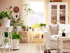 4 plante ideale pentru decorarea apartamentului in timpul verii