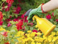 Inlocuieste irebicidele si insecticidele cu detergent de vase
