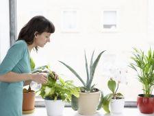 Ai udat planta in exces? Iata cum o poti salva
