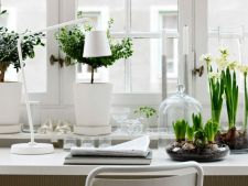 3 plant perfect for the your Office decorate