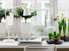 3 plante perfecte pentru a-ti decora biroul
