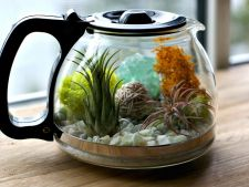 How to turn a   kettle in terrarium