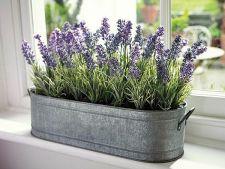 3 plante pe care sa le tii in dormitor pentru un somn odihnitor