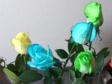 Cum schimbi singur/a culoarea florilor din vaza VIDEO
