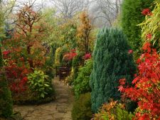 3 arbusti decorativi pentru o gradina de basm, tot timpul anului