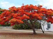 8 copaci uimitori din intreaga lume! Pe care vrei sa-l ai in gradina?