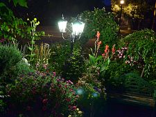 3 plant scented which bloom just night