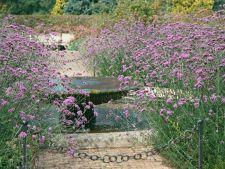 Alunga tantarii din gradina cu ajutorul plantelor