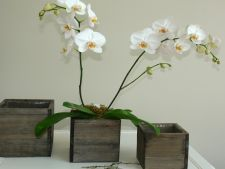 Cand si cum se transplanteaza orhideea intr-un nou ghiveci