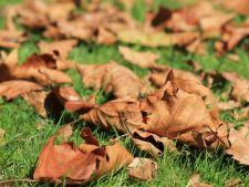 Cum sa faci compost cu ajutorul frunzelor de toamna