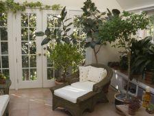 3 plante de apartament care te pot otravi