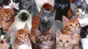 Weekendul pisicilor la Bucuresti! Expozitia felina cu tematica Western