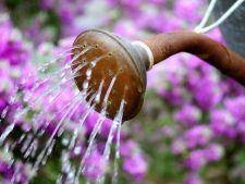 Apa in exces, inutila pentru gradina ta: 4 sfaturi esentiale