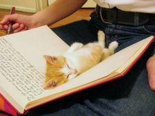 Dovada ca pisicilor nu le pasa de spatiul tau personal