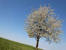 Testul arborelui. Alege copacul preferat si vezi ce spune despre personalitatea ta
