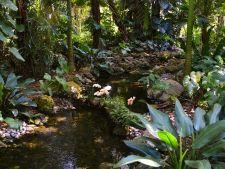 Gradina botanica tropicala Fairchild, din Florida, un adevarat paradis pentru vizitatori! Galerie foto