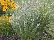 3 plante pe care orice posesor de pisica trebuie sa le aiba in gradina