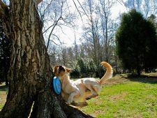 5 caini care au regretat rapid alegerile facute! Galerie foto amuzanta