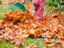 Ragnarok in  ! November month What must to do month it in Garden