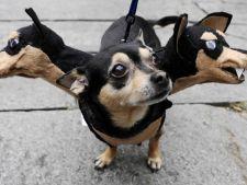Tu iti costumezi animalul de Halloween? Idei amuzante din care sa te inspiri