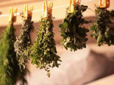 Bucura-te de plantele aromatice si in timpul iernii! Invata cum sa le usuci