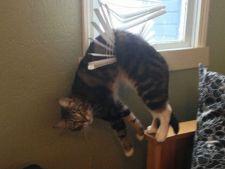 9 pisici care au regretat rapid alegerile facute