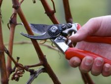 How to the and tunzi to care for properly     trees and shrubs, in the cold season