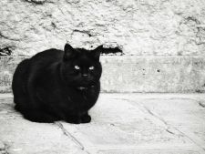 Pisica neagra, superstitii si mituri! Tu te feresti de ea?