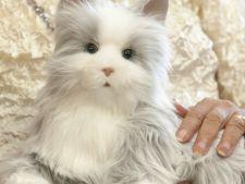 Pisica robot, care pare reala! Toarce, miauna si adora sa fie mangaiata VIDEO
