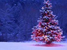 Horoscop chinezesc: ce te asteapta in luna decembrie in functie de zodie
